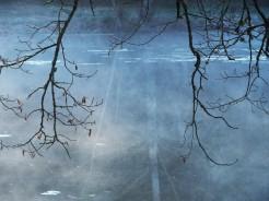 Branches et reflet de branches