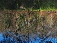 Tête de lion dessinée par les arbres