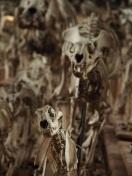 Muséum...squelette empathique